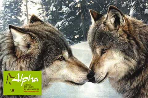 Alpha, la parc des loups
